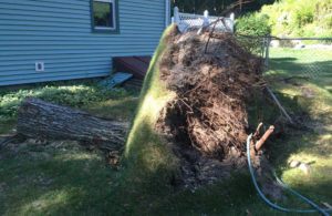 Silers-Stump-Grinding-Root-Ball-Blow-Over Traverse City Stump Grinding