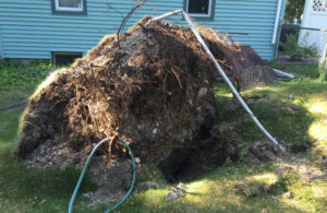 Silers-Stump-Grinding-Root-Ball-Blow-Over2 Traverse City Stump Grinding Services